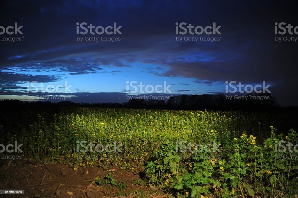 ufo - scary light circle at night on cornfield royalty-free stock photo