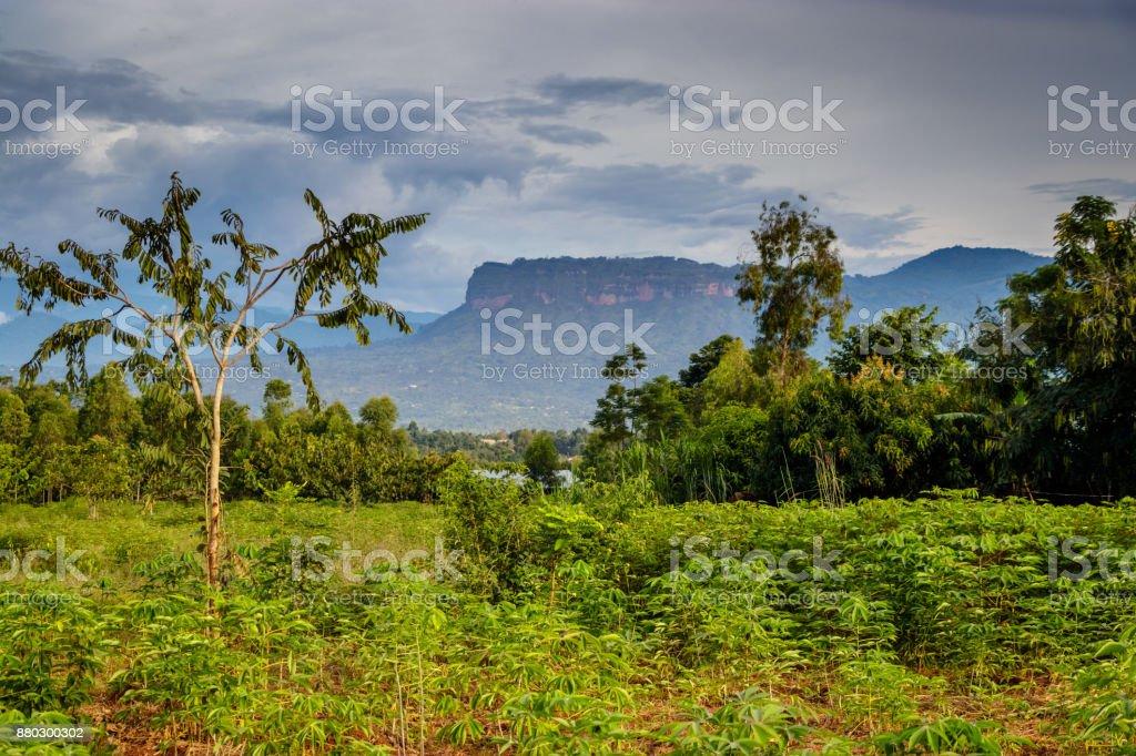 Uganda nature stock photo