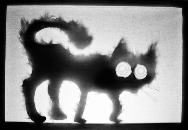 Ugly cat picture id184643966?b=1&k=6&m=184643966&s=612x612&w=0&h=vf5lo4co19earldjre5bympumfkmjbdxx7o0wguzbzk=