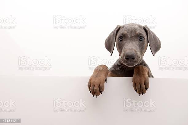 Ugly dog picture id471811211?b=1&k=6&m=471811211&s=612x612&h=1ndfac4nu1bpys0xgiapdassn7jvkh8hiwrfgssw884=