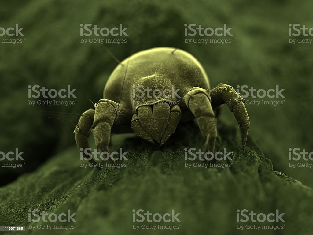 ugly mite stock photo
