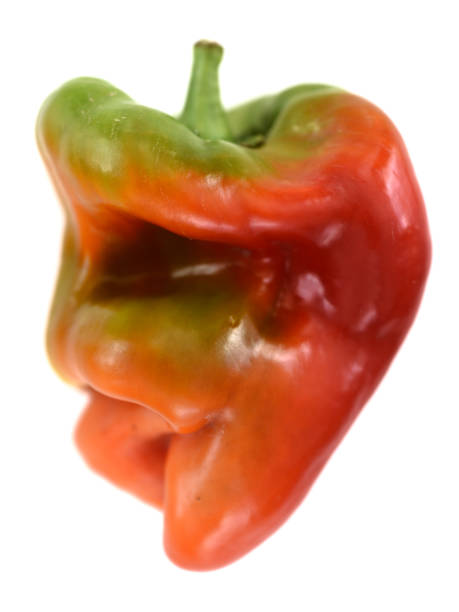 ugly shaped organic vegetables. deformed homegrown bell pepper isolated on white - imperfection stock photos and pictures