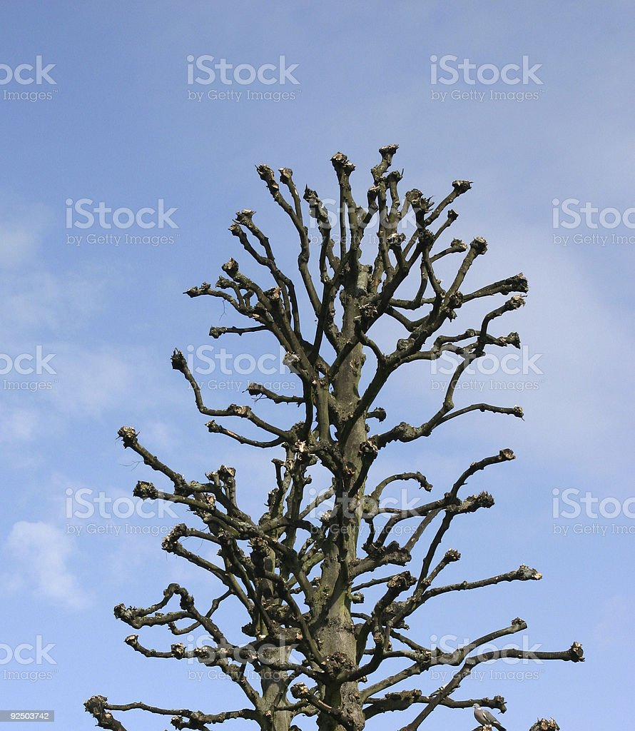 Ugly Tree royalty-free stock photo