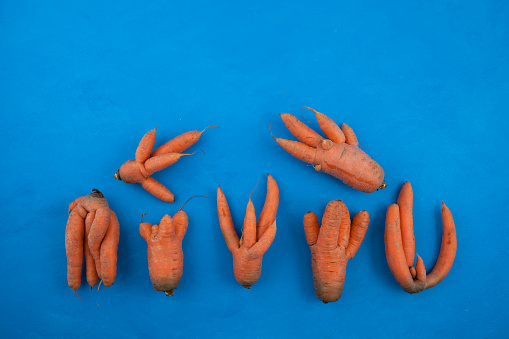 Ugly vegetables of abnormal shape. Funny conjoined carrots on a blue background. Selective focus, copy space. Concept - Food waste reduction. Using in cooking imperfect products.