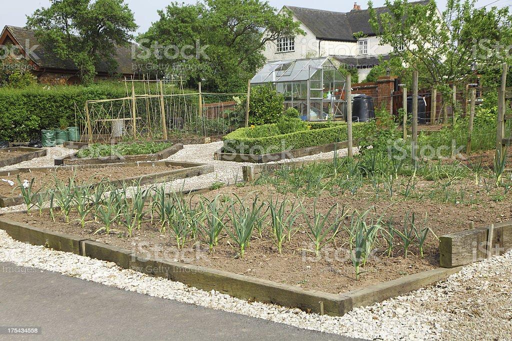 Uk allotment garden stock photo