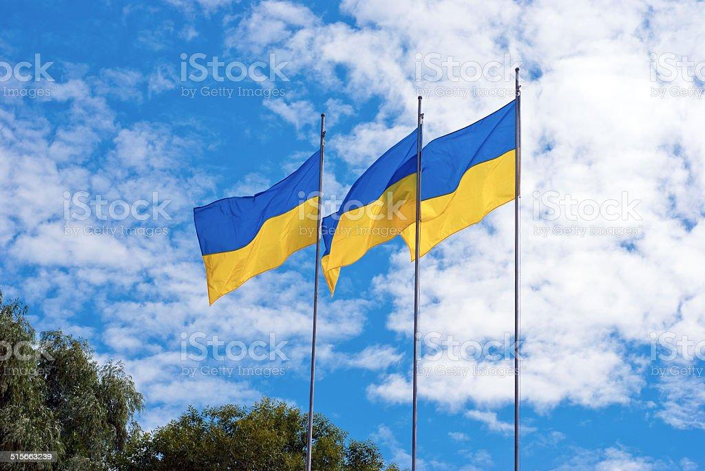 Ukrainian flags on a background of blue sky stock photo