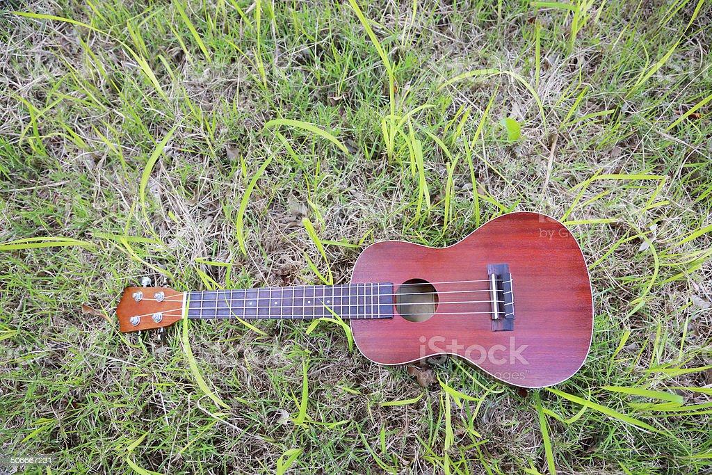 Ukulele on green grass background stock photo
