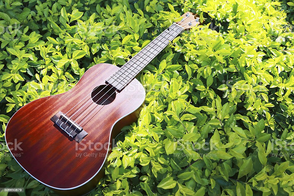 Ukulele put on a green leave with sun shines down stock photo