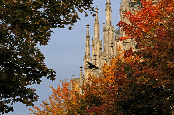 Ulm Minster in autumn view to pinnacles of Ulm Minster in autumn with flying pigeon ulm minster stock pictures, royalty-free photos & images