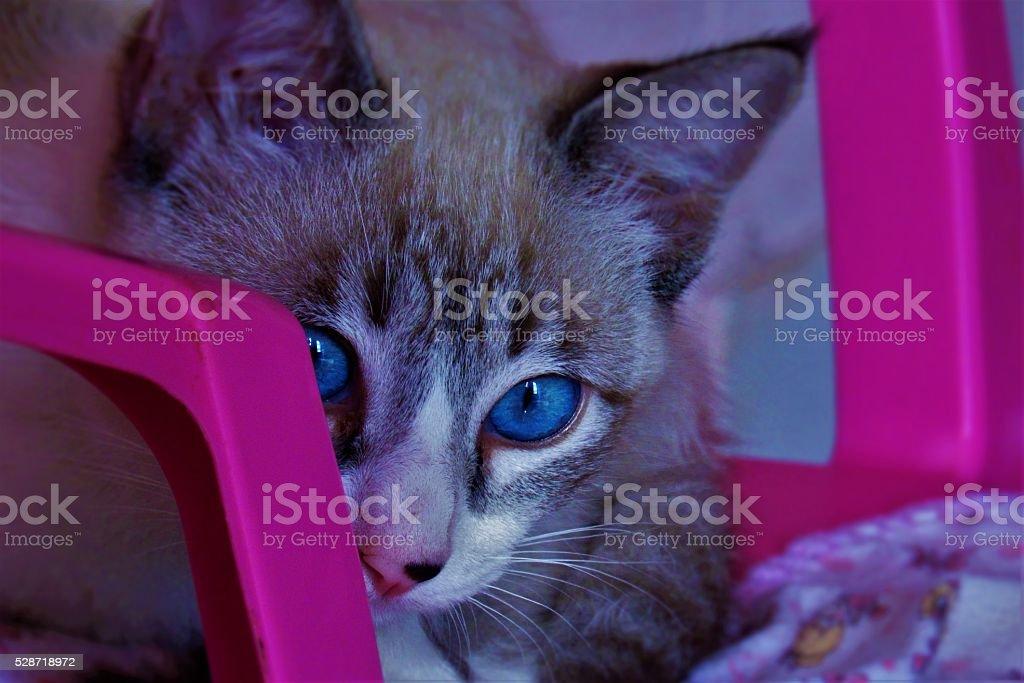 Um olhar felino stock photo