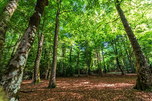 Vieste, Foggia, Puglia, Italia: La riserva naturale