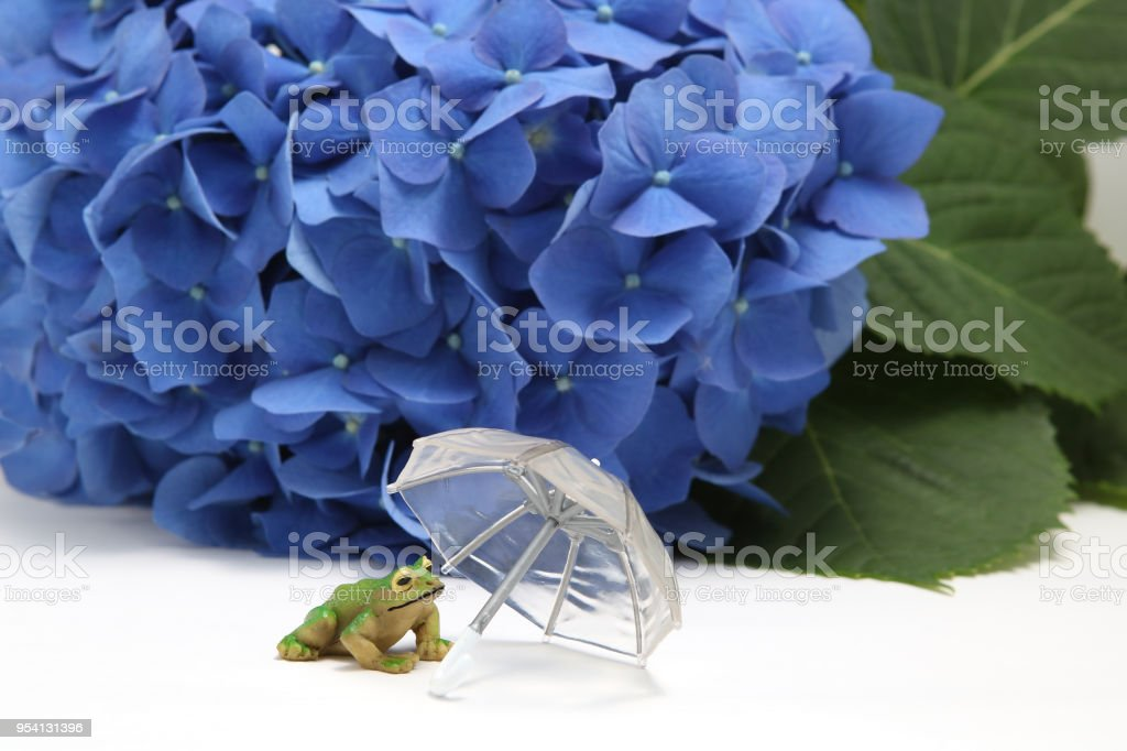 Umbrella, hydrangea and a frog on white background. stock photo