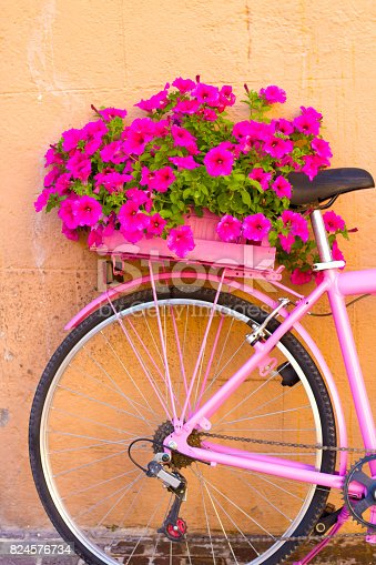 Umbria, Italy: Pretty pink petunias on the back of a pink bike against an orange wall. Copy space available. Shot in Montefalco.