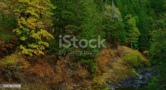 West-Central Oregon's Cascade Range. Umpqua National Forest/NW Zone. Brice Creek.