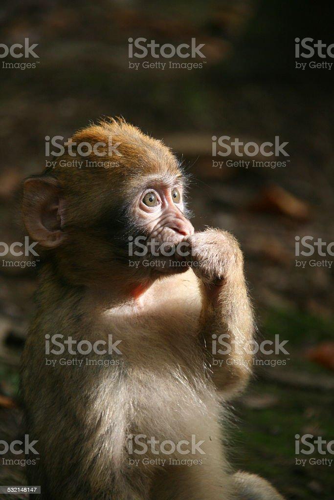 Un singe au soleil stock photo