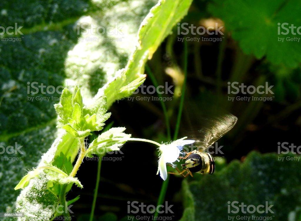 Una Avispa Moviendo Las Ach - Lizenzfrei Ast - Pflanzenbestandteil Stock-Foto