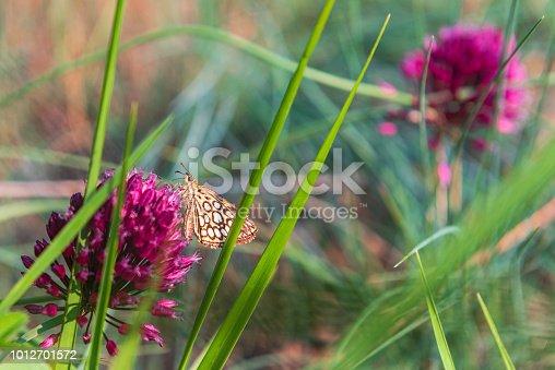 Nel bosco, tra fiori e fili d'erba, si posa una farfalla