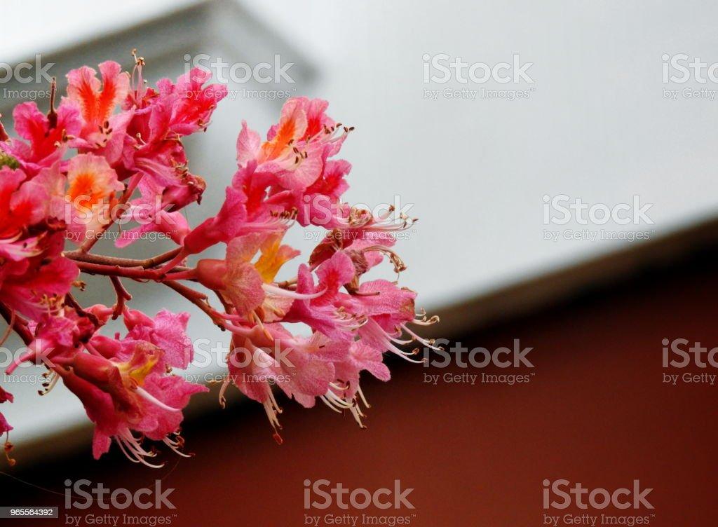 Una flor asomando por el balcon stock photo