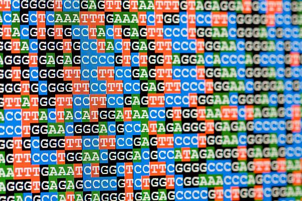 Unaligned DNA-Sequenzen Blick auf LCD-Bildschirm – Foto