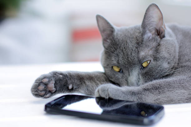 unauthorized access restriction the incognito cat paw covers his face reflected in the smartphone alias stock pictures, royalty-free photos & images
