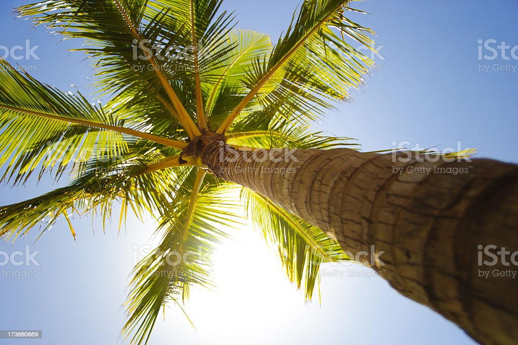 Unbearable Lightness of Being Under a Palm Tree in Hawaii royalty-free stock photo