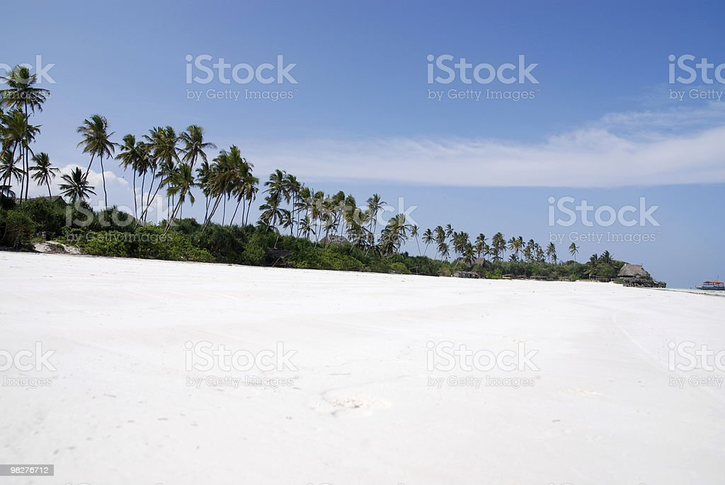 unbelievable white sand beach and palm in a row royalty-free stock photo