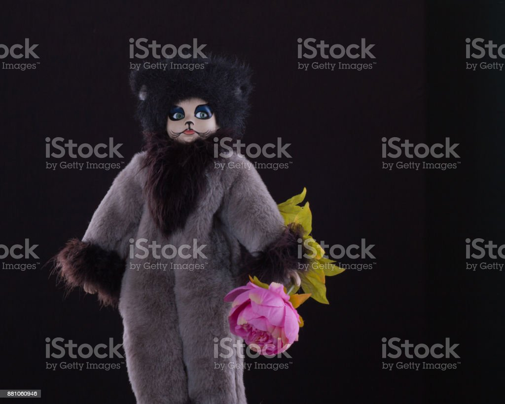 Uncommon doll-cat with a rose stock photo