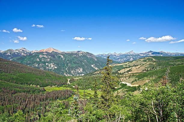 Uncompahgre Peak and Beetle Kill Trees - foto de acervo
