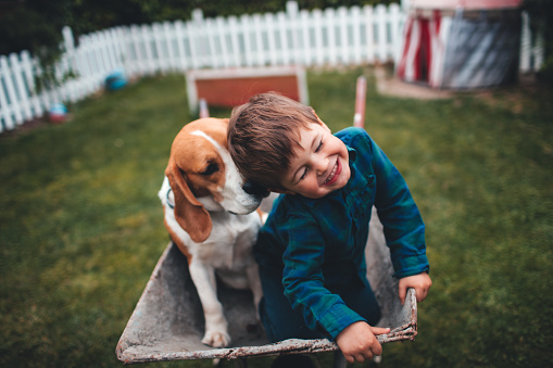 Photo of little smiling boy and his dog having fun outdoors, driving together in a wheelbarrow.