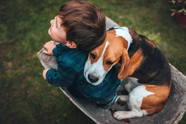 Unconditional love Photo of little smiling boy and his dog having fun outdoors, driving together in a wheelbarrow. beagle stock pictures, royalty-free photos & images