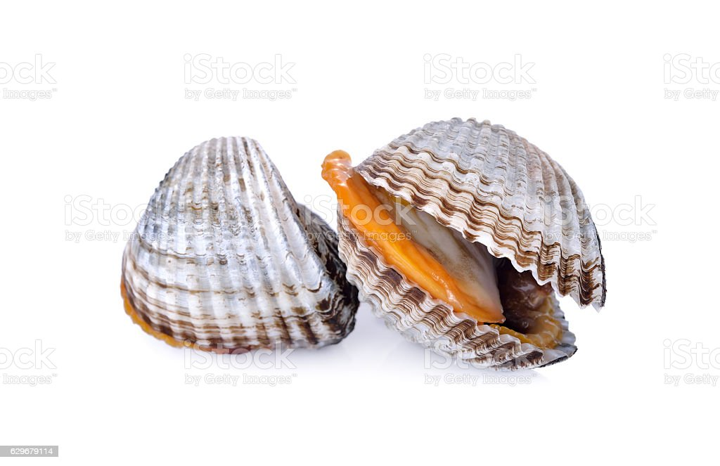 uncooked blood cockle or ark shell on white background - foto de stock