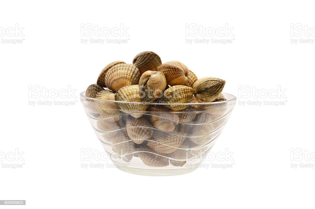 Uncooked Cockle Clam Shellfish Seafood - foto de stock