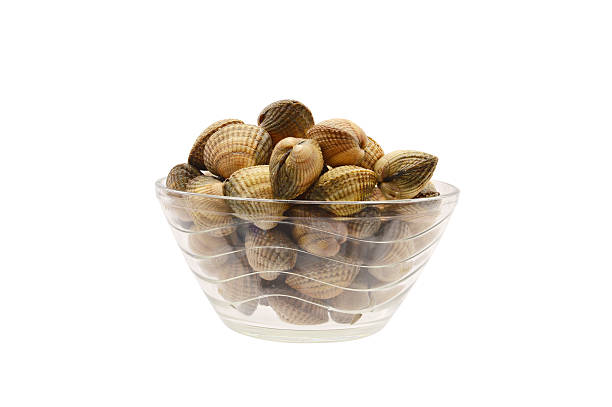 uncooked cockle clam shellfish seafood - herzmuschel stock-fotos und bilder