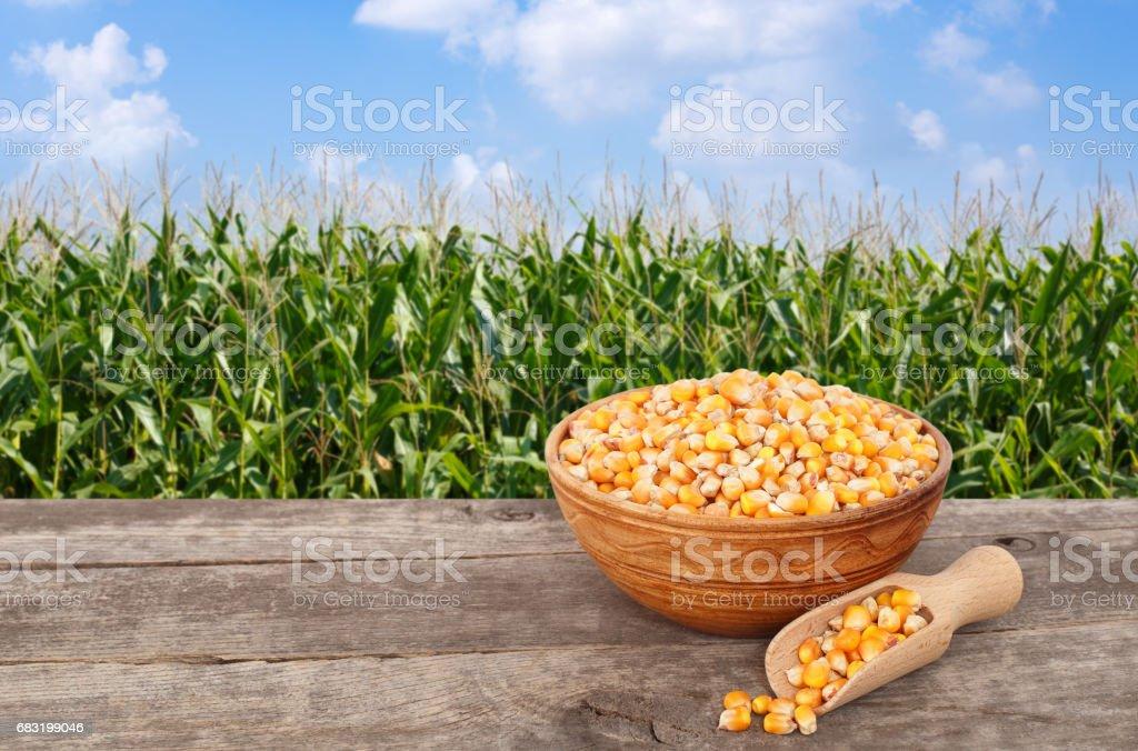 그릇에 생 쌀된 옥수수 곡물 royalty-free 스톡 사진