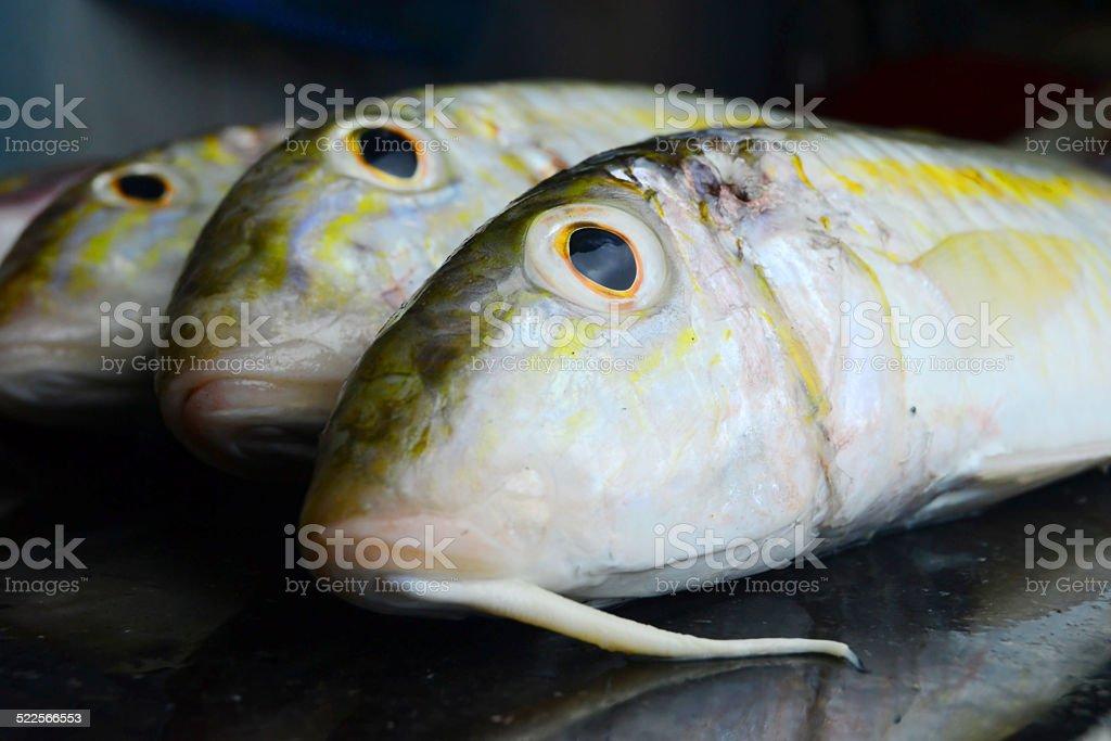 uncooked fish stock photo