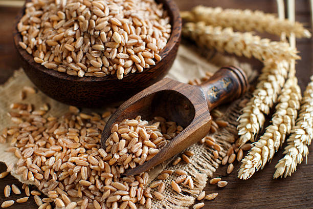 Uncooked whole spelt grain in a bowl with spelt ears Uncooked whole spelt grain in a bowl with a wooden spoon and spelt ears on the table spelt stock pictures, royalty-free photos & images