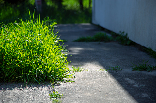 Uncut grass around the house