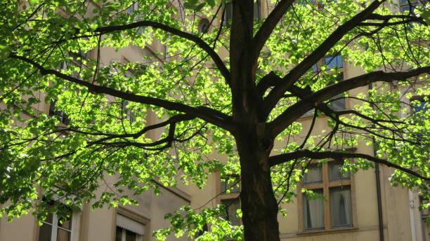 Sous un arbre en été stock photo