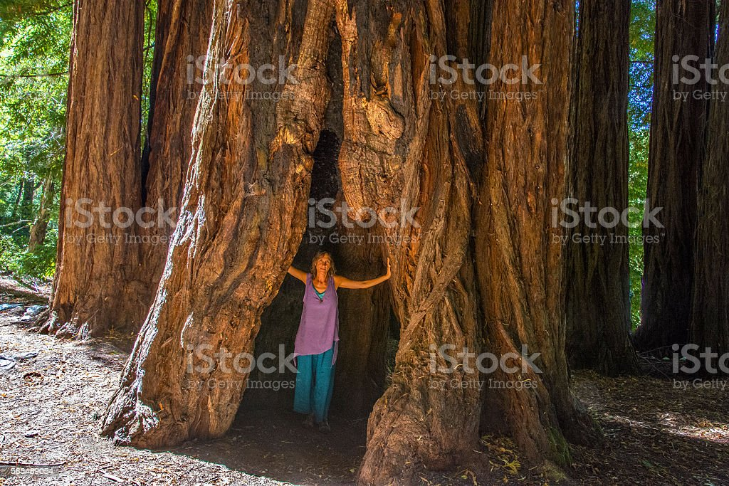 Under giant redwoods stock photo