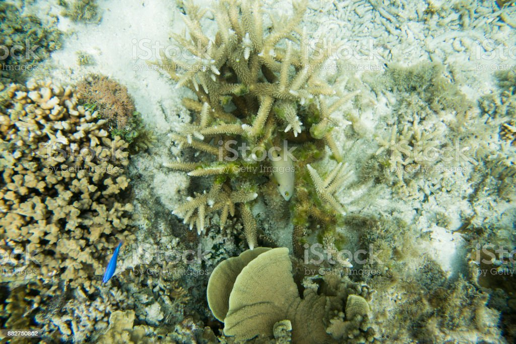 Under Sea Reef World stock photo