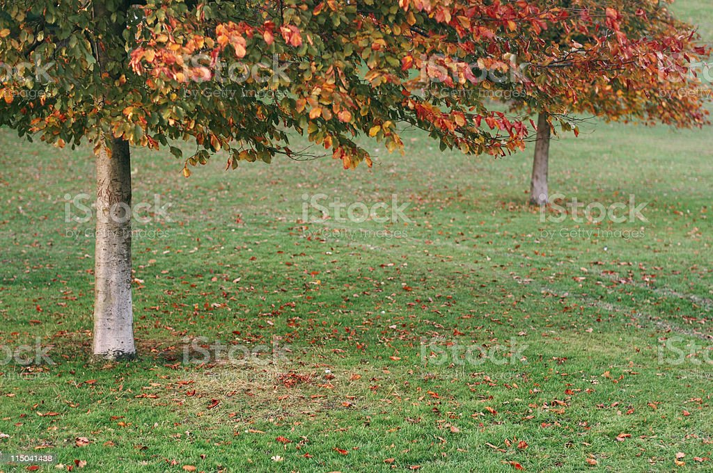 Under the autumnal trees royalty-free stock photo