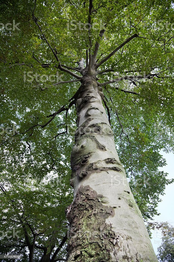Under the big tree royalty-free stock photo