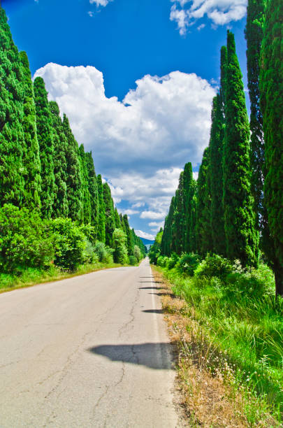 under the blue sky with white clouds in the sunlight the most famous tree-lined avenue in the world - foto stock