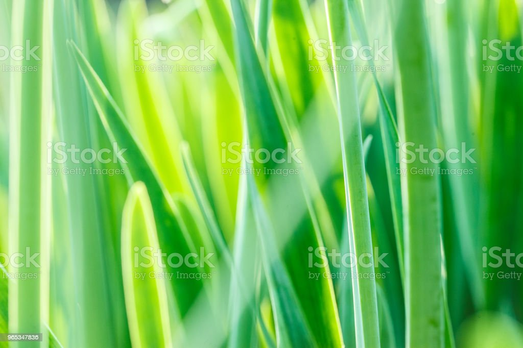 Under the bright sun. Abstract natural backgrounds royalty-free stock photo