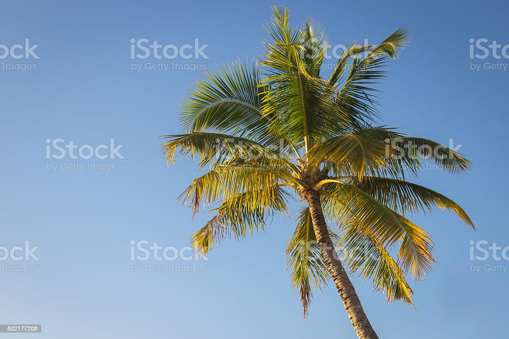 under the coconut tree in vintage style stock photo more pictures
