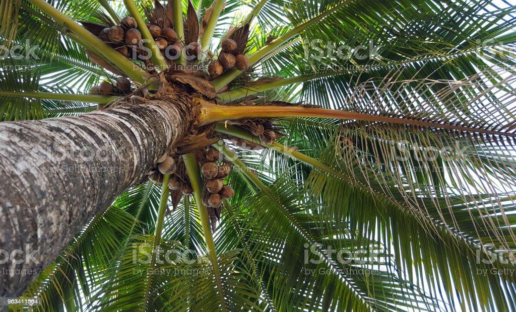 Pod drzewem kokosowym - Zbiór zdjęć royalty-free (Bez ludzi)