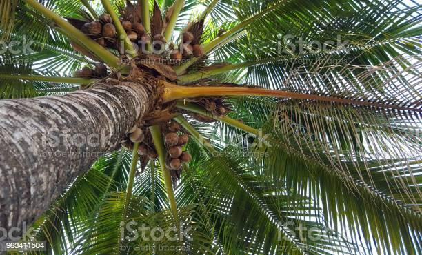 Pod Drzewem Kokosowym - zdjęcia stockowe i więcej obrazów Bez ludzi