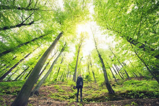 Unter den grünen Wald – Foto