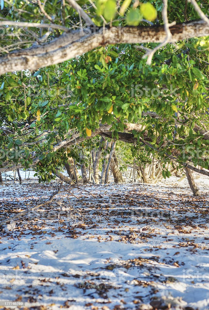 Under the Mangroves stock photo