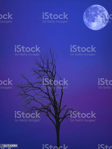 Photo of Under The Moon